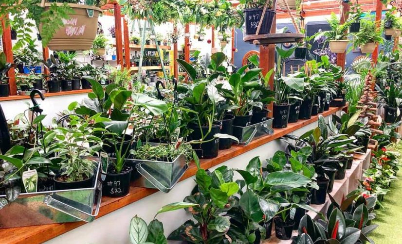 VEND Marketplace in Sandgate Road Stages One-Day Greenhouse Plant Sale